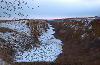 Birds fly from an empty canal north of Rocky Ford, Colo. Sprawling Aurora, a suburb of Denver and now Colorado's third-largest city, faces challenges in acquiring enough water for its industry and population in a near-desert region. The city has been buying and leasing agricultural water rights from farmers hundreds of miles away in places such as Rocky Ford. (Kevin Moloney for the New York Times)