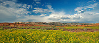 920750004 panorama view of rabbitbrush blooms below the striaght cliffs or escalante rim along the hole-in-the-rock road near escalante in escalante grand staircase national monument utah united states