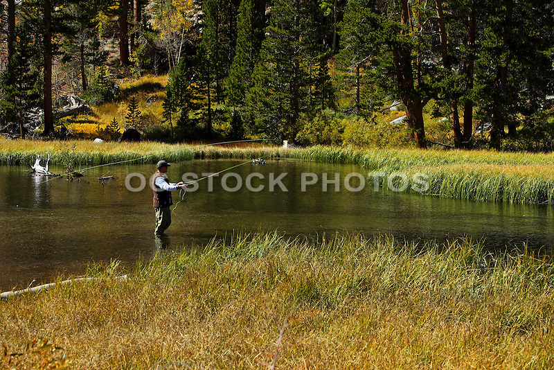 Fly fishing in a stream at the eastern sierras socal for Eastern sierra fishing