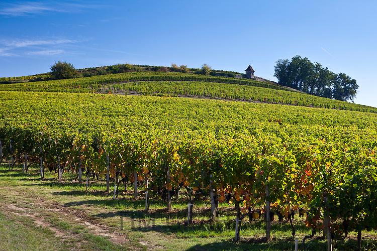 Vineyard on hill slopes at St Emilion in the Bordeaux wine region of France