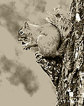 Graphic treatment of a squirrel image.