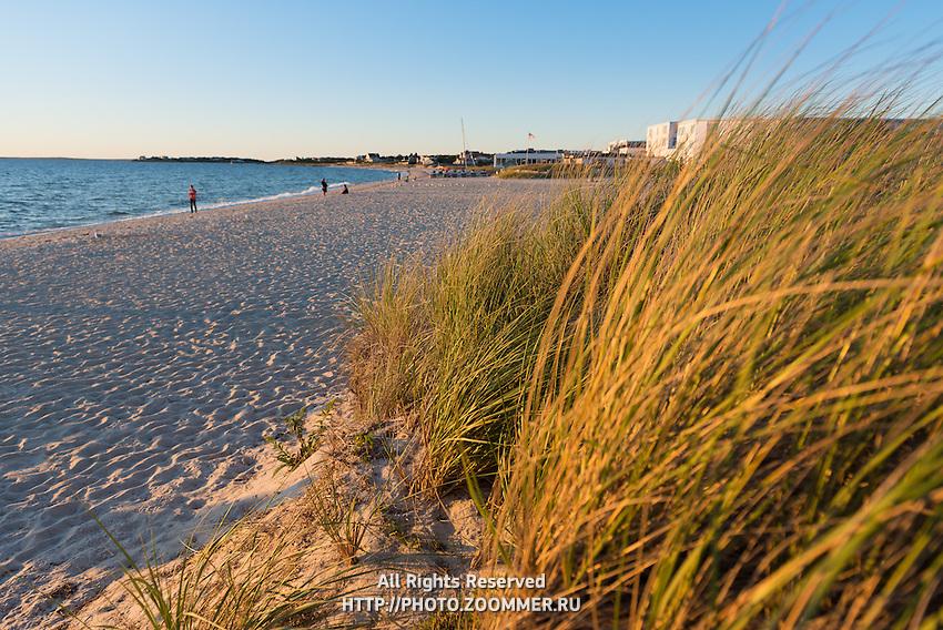 Heather Beach Grass on Old Silver Beach, Falmouth, Cape Cod