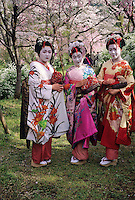 A trio of Miko Girls walk in the  Hara-Dani Cherry Garden in spring.