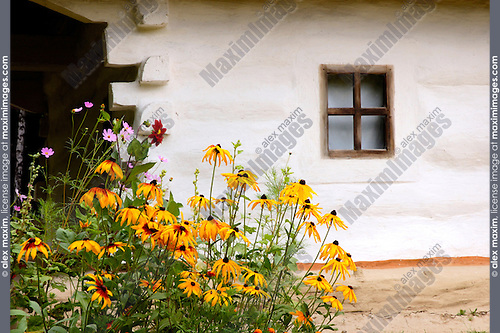 Ancient log country house window and ox-eye daisies Vintage rural architecture Eastern Europe Ukraine