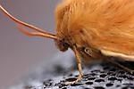 Butterflies, Moths and Caterpillars