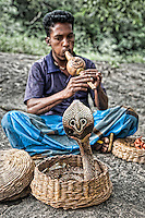 Snake charmer and cobra performing at a temple. (Photo by Matt Considine - Images of Asia Collection)
