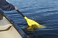 Hortonia, VT, USA - August 23, 2011: Canoe paddle in lake