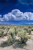Sagebrush in the Pumice Valley with sumer thunderstorm forming in the desert east of the Sierra Nevadas, near Lee Vining; California, AGPix_0564.