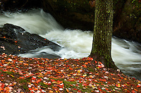 A small flowing stream flows through a forest floor covered in autumn leaves. Upper Peninsla MI