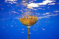 FAD - Fish Aggregation Device and small bait fish, Kona Coast, Big Island, Hawaii, USA, Pacific Ocean