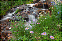 Another Colorado Image from atop Berthoud Pass - this one of daisies growing around a small stream. Hike a little ways off of Highway 40 between Berthoud Pass and Winter Park, Colorado, and you'll find many places to capture great Colorado pictures.