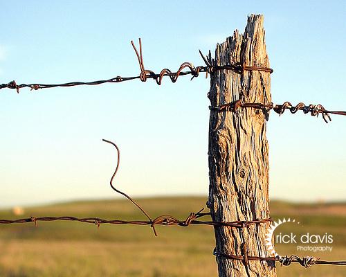 Cedar Fence Post Rick Davis Photography
