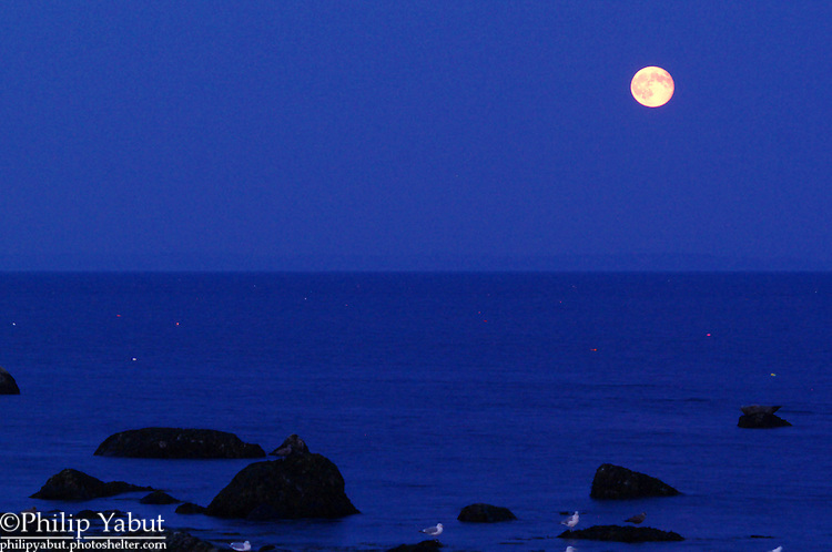 A post-Harvest waning gibbous moon rises over Rockland Harbor, Maine.