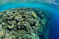 A healthy coral reef drops abruptly to thousands of feet at Mount Mutiny, Bligh Water, Fiji, Pacific Ocean
