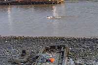 A homeless man takes an early morning dip in the river thames this morning.<br /> He left his clothes by the river side and was happily swimming and waving at passers by.<br /> <br /> River Thames / Oxo Tower<br /> <br /> Photo by Steve Meddle