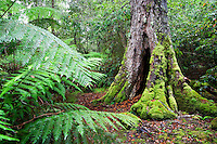 Australia - Barrington Tops, NSW