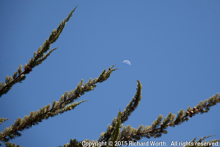 A quarter moon appears to be tossed between branches at a neighborhood park.