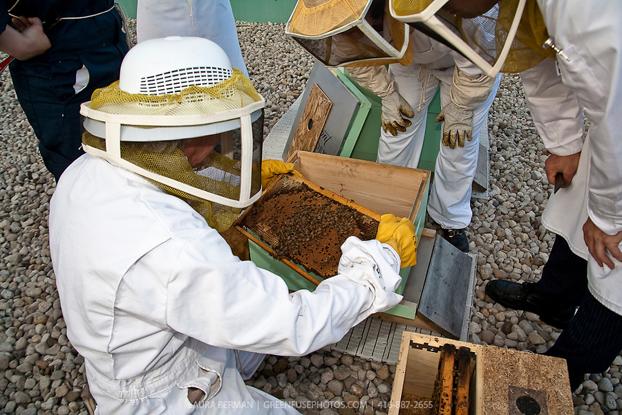 Urban beekeeping by the Toronto Beekeepers Cooperative on the roof of the Royal York Hotel in downtown Toronto.