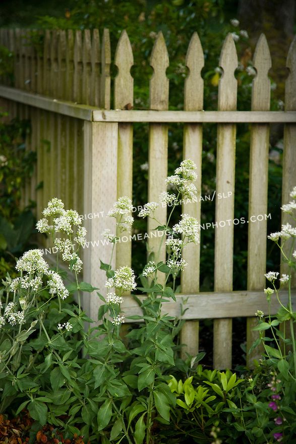 a shallow-focus detail photo of white country flower stalks in front of a weathered wooden picket fence<br /> <br /> a 2-acre residential garden garden on rural property north of Seattle features recycled, reused, and repurposed materials, a romantic farmhouse cottage garden, and a white garden modeled on the famous garden at Sissinghurst.
