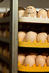 July 24, 2015. Candor, North Carolina.<br />  At the Eagle Springs Hatchery, which turns over 1.1 million chicks a week, eggs from Western North Carolina arrive to be incubated, or &quot;set&quot; and then hatched. Each egg batch is labeled with the farm that produced it, as well as the day it was hatched. This helps the hatchery notify its producers if any of their eggs are not up to the standards required for antibiotic free use.<br />  Chicken producer Perdue Farms Inc. has become the first major poultry company to attempt to raise more than half of its flock with no antibiotics, human or for animals only. As demand for meats free of medicines has risen, Perdue has upgraded their facilities to increase cleanliness and sterility to allow the company to cut antibiotics out of the chicken hatching process.