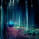 Surreal forest scenery - manipulated photograph