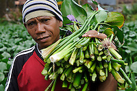 A man harvesting water hyacinth from a pond, Makassar, Sulawesi, Indonesia.  The hyacinth is then used to produce material for sandals.