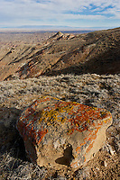 Lichen covered rock and badlands in the Bighorn Basin