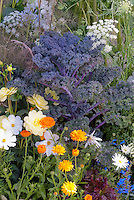 Kale 'Redbor', Leucanthemum, Calendula, Ammi, vegetables and flowers in garden combination all in one garden, pretty flowers and vegetables crops in edible landscape border variety intermixed