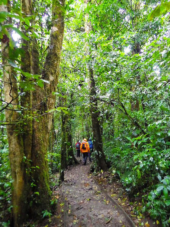 The Monteverde Cloud Forest Reserve (Reserva Biológica Bosque Nuboso Monteverde) is a Costa Rican reserve located along the Cordillera de Tilarán mountain range within the Puntarenas and Alajuela provinces. Named after the nearby town of Monteverde and founded in 1972, the Reserve consists of over 26,000 acres of tropical rainforest. The Reserve consists of 6 ecological zones, 90% of which are virgin forest. An extremely high biodiversity, consisting of over 2,500 plant species (including the most orchid species in a single place), 100 species of mammals, 400 bird species, 120 reptilian and amphibian species, and thousands of insects, has drawn scientists and tourists since.