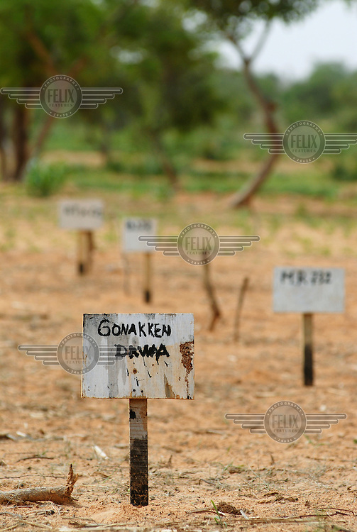 Small signs indicate the different types of millet and groundnut seed planted in an IFAD-funded crop trialling programme at El Gueza. The project's aim is to determine which crop varieties are best suited to the dry sub-Saharan Sahel lands of southern Niger.