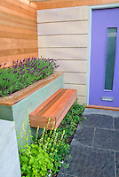 Fragrant garden plant Lavandula lavender planted at front door entranceway of house with garden seat to enjoy scented plants, foundation plantings, wooden garden bench, pretty purple door and slate walkway path