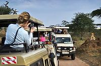 Tourists photograph a young lion.