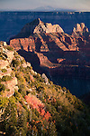 View of Grand Canyon as the sun sets along the north rim. Fall colors of scrub oak in the canyon.