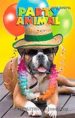 Animals - funny photos
