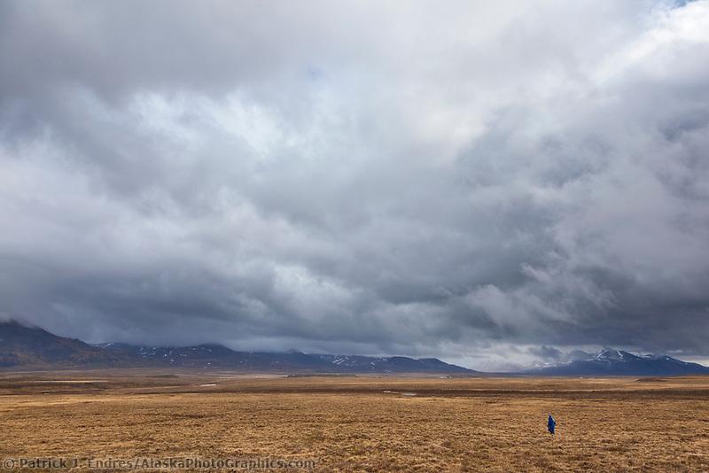Tussock hiking, Brooks range, National Petroleum Reserve, Alaska.