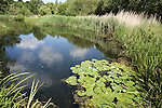 Large pond, Barnes Wetland Trust, London UK, WWT,