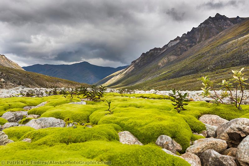 Green moss on rocks, Tupik creek, Brooks Range, Gates of the Arctic National Park, Alaska