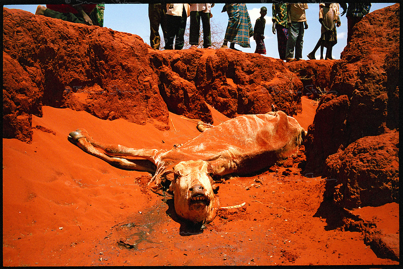 Libehia, NE Kenya, March 2006.More than 4 millions people are affected in the region by the worst drought in man's memory. The livestock is decimated and a whole lifestyle threatened.