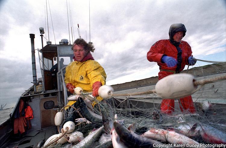 Sockeye salmon fishing in Bristol Bay Alaska on board the F/V Dr. Jack in July 1998