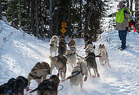 Mitch Seavey's team heads for Emswiler Lake after starting the 2013 Iditarod in Willow. (Stephen Nowers photo)