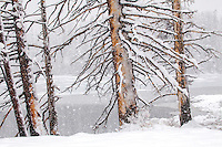 Spring snow, Sylvan Lake, dead trees, Yellowstone National Park