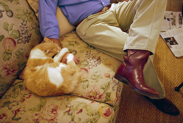 15 Nov 2000, Austin, Texas, USA --- George W. Bush teases his cat Ernie while at the Governor's Mansion in Austin, Texas. Governor of Texas since 1994, Bush was granted the United States presidency over Vice President Al Gore in December of 2000, after a controversial vote recount in Florida. --- Image by © Brooks Kraft/Sygma/Corbis