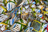 Live blue crabs, tied with palm leaves, are seen for sale at the seafood and fish market in Veracruz, Mexico, 29 June 2015.