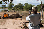Tourist photographing white rhino , Hlane Royal National Park game reserve, Swaziland, Africa