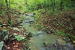 Bowling's creek, Eno River State Park, North Carolina