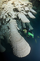 RX0724-D. scuba diver (model released) exploring a cenote admires unusual speleothems, limestone formations hanging from the ceiling of a submerged cavern 100 feet deep. The white misty cloud at the bottom of the picture is a layer of hydrogen sulfide. Riviera Maya, Yucatan Peninsula, Mexico.<br /> Photo Copyright &copy; Brandon Cole. All rights reserved worldwide.  www.brandoncole.com
