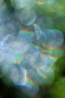 With soft focus, raindrops act as prisms, creating little round raindows.