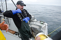 A charter captain brings a client's halibut on board during a June 2011 trip to Montague Island.