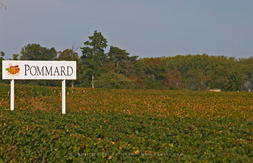 Vineyard. Pommard. Burgundy, France