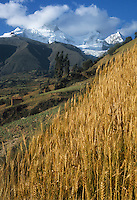 Peru, Andes Montain Range - Cordillera de los Andes. Cordillera Blanca mountain range: snow-covered Mount Huandoy. Wheat field in foreground.